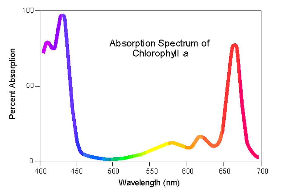 Absorbtion spectrum of chlorophyll a
