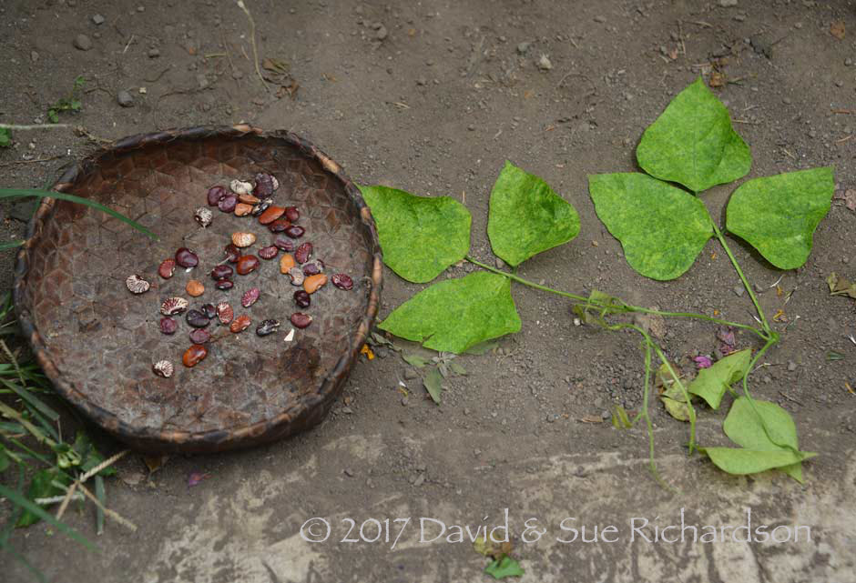 Description: The seeds and leaves