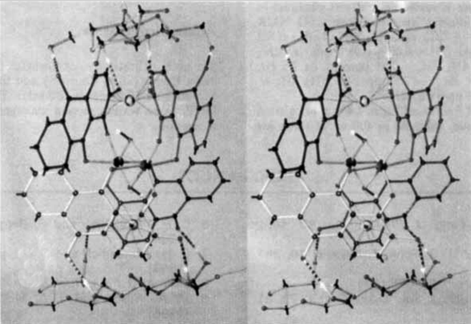 Description: Stereoscopic view of a closed alizarin tetrahydrate complex binding with two cellubiose units