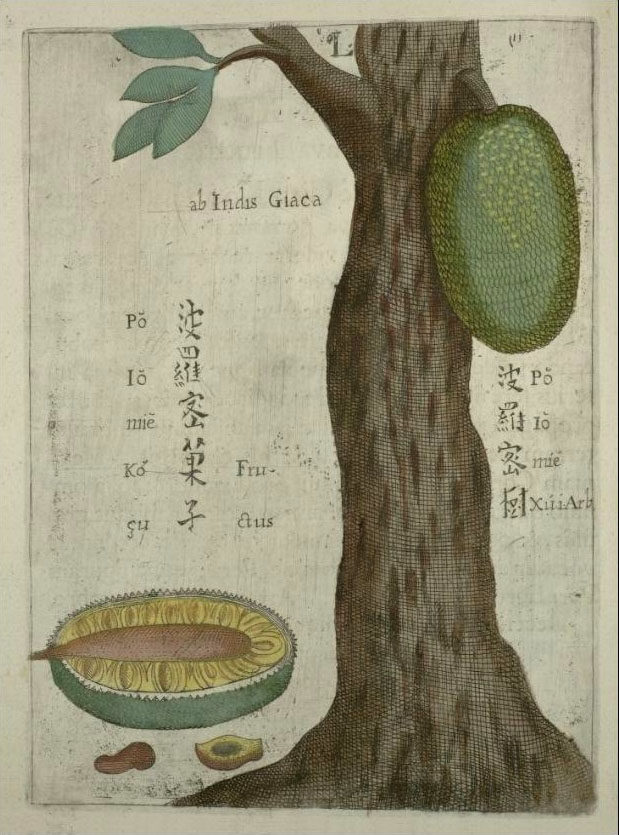 Description: A jackfruit tree in China